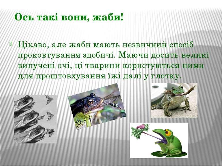 Цікаво, але жаби мають незвичний спосіб проковтування здобичі. Маючи досить в...