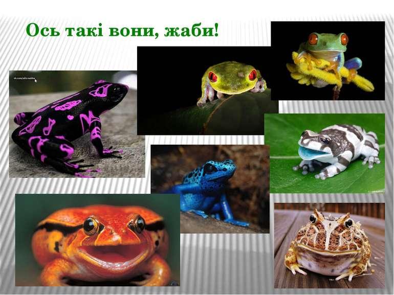 Ось такі вони, жаби!