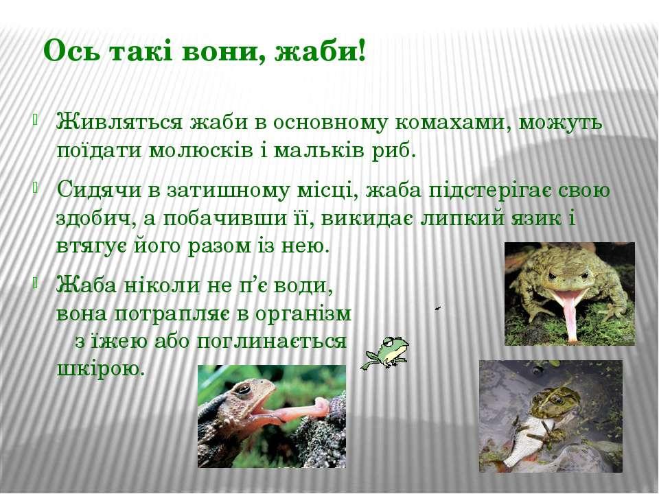 Живляться жаби в основному комахами, можуть поїдати молюсків і мальків риб. С...