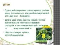 Одна з найпоширеніших олійних культур. Насіння ріпаку поставляється для вироб...