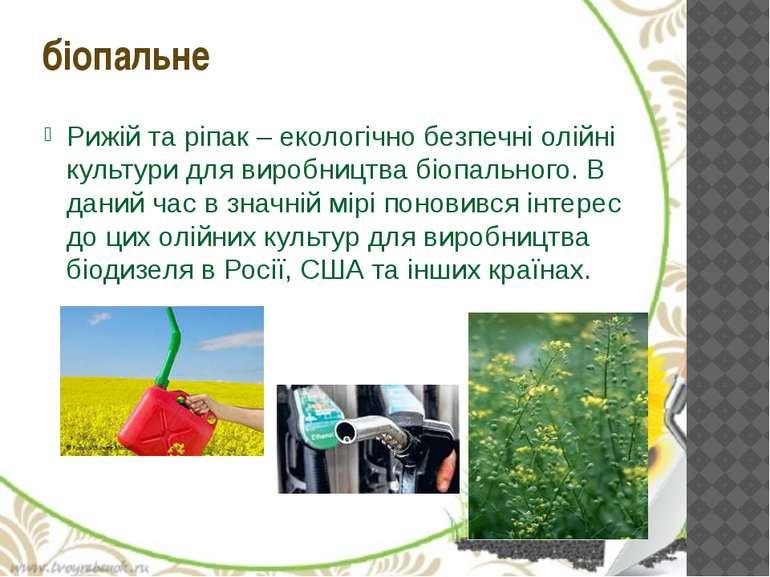 Рижій та ріпак – екологічно безпечні олійні культури для виробництва біопальн...