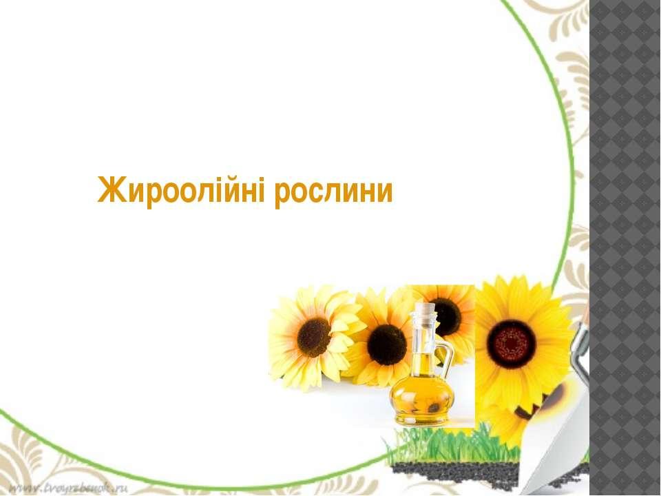 Жироолійні рослини