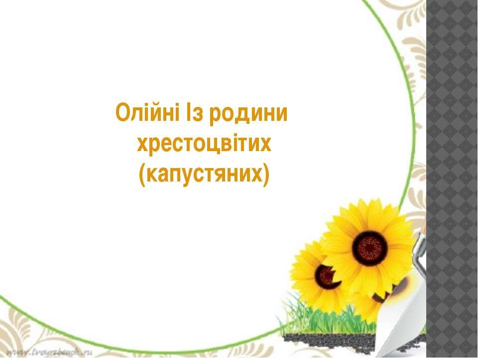 Олійні Із родини хрестоцвітих (капустяних)