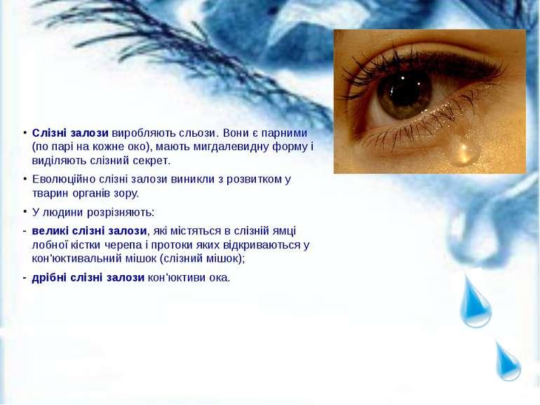 Слізні залози виробляють сльози. Вони є парними (по парі на кожне око), мають...