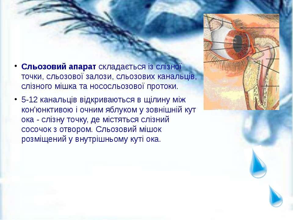 Сльозовий апарат складається із слізної точки, сльозової залози, сльозових ка...