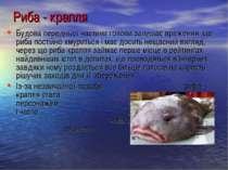 Будова передньої частини голови залишає враження, що риба постійно хмуриться ...