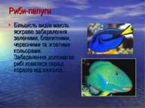Більшість видів мають яскраве забарвлення зеленими, блакитними, червоними та ...
