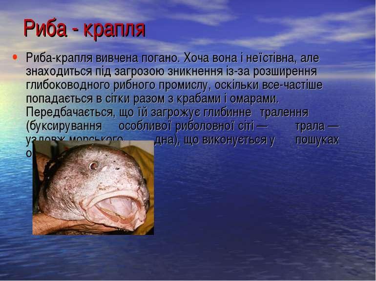 Риба-крапля вивчена погано. Хоча вона і неїстівна, але знаходиться під загроз...