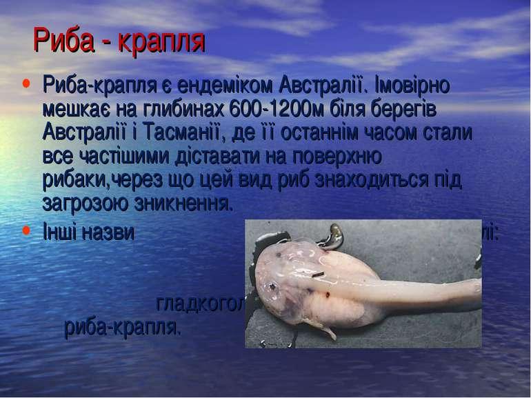 Риба-крапля є ендеміком Австралії. Імовірно мешкає на глибинах 600-1200м біля...
