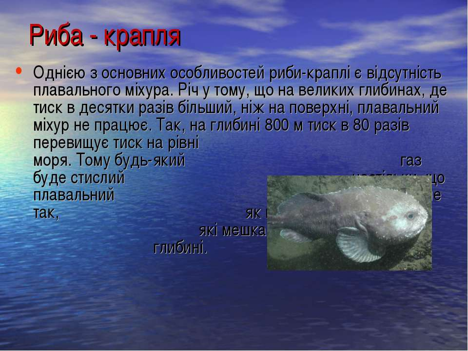 Однією з основних особливостей риби-краплі є відсутність плавального міхура. ...