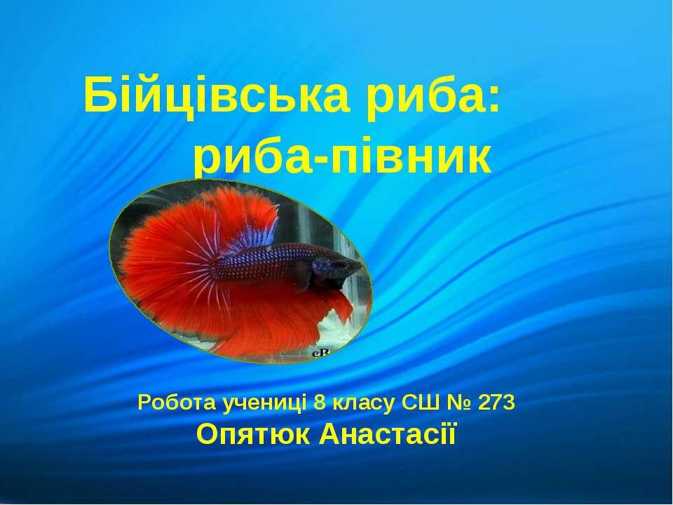Бійцівська риба: риба-півник Робота учениці 8 класу СШ № 273 Опятюк Анастасії