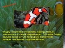 Кладку охороняє в основному самець, мальки з'являються у повній темряві через...