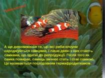 А ще дивовижніше те, що всі риби-клоуни народжуються самцями, і лише деякі з ...