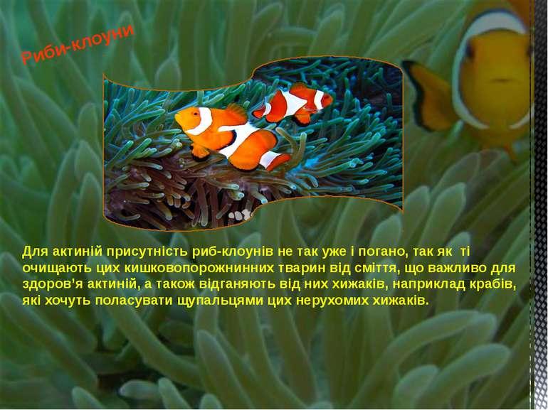 Для актиній присутність риб-клоунів не так уже і погано, так як ті очищають ц...