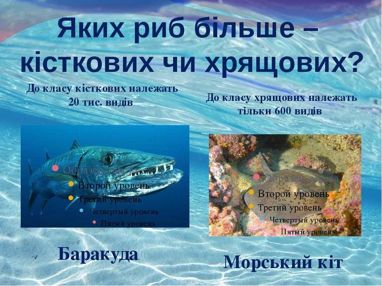 Яких риб більше – кісткових чи хрящових? До класу кісткових належать 20 тис. ...