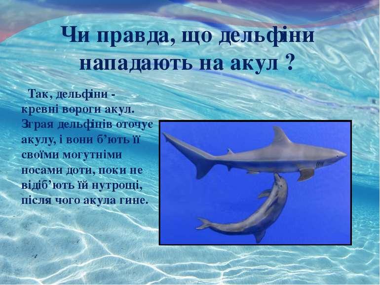 - Чи правда, що дельфіни нападають на акул ? Так, дельфіни - кревні вороги ак...