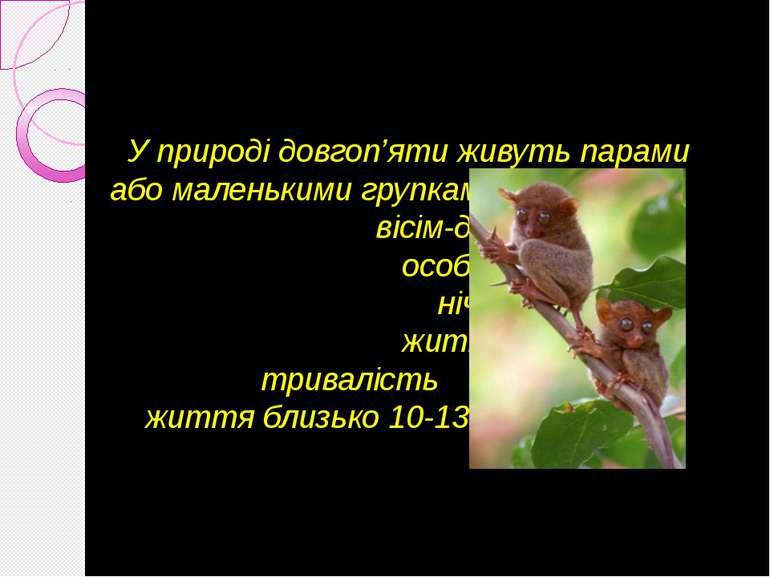 У природі довгоп'яти живуть парами або маленькими групками по вісім-десять ос...