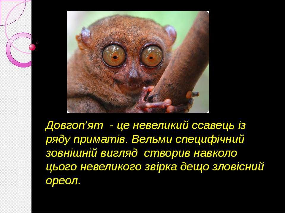 Довгоп'ят - це невеликий ссавець із ряду приматів. Вельми специфічний зовнішн...