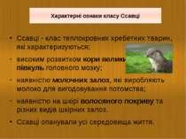 Ссавці - клас теплокровних хребетних тварин, які характеризуються: високим ро...