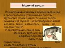 Специфічними органами є молочні залози, що в процесі еволюції утворилися із п...