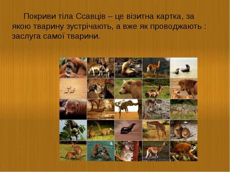 Покриви тіла Ссавців – це візитна картка, за якою тварину зустрічають, а вже ...
