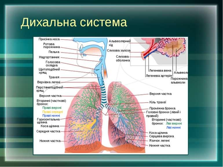 Дихальна система
