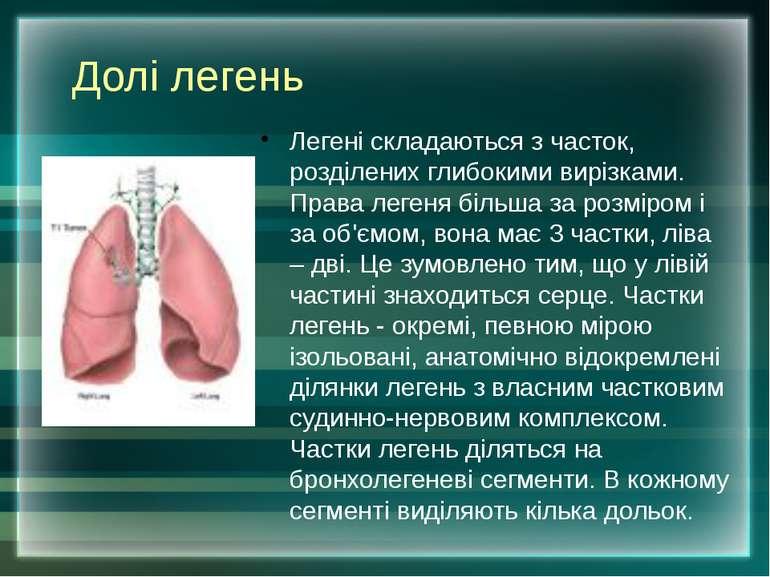 Долі легень Легені складаються з часток, розділених глибокими вирізками. Прав...