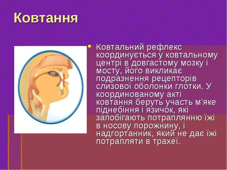 Ковтальний рефлекс координується у ковтальному центрі в довгастому мозку і мо...