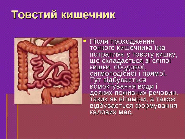 Після проходження тонкого кишечника їжа потрапляє у товсту кишку, що складаєт...