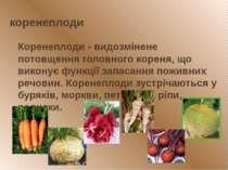 коренеплоди Коренеплоди - видозмінене потовщення головного кореня, що виконує...