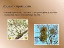 Корені - присоски Корені–присоски - гаусторії - зустрічаються у рослин-парази...