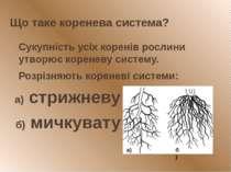 Що таке коренева система? Сукупність усіх коренів рослини утворює кореневу си...