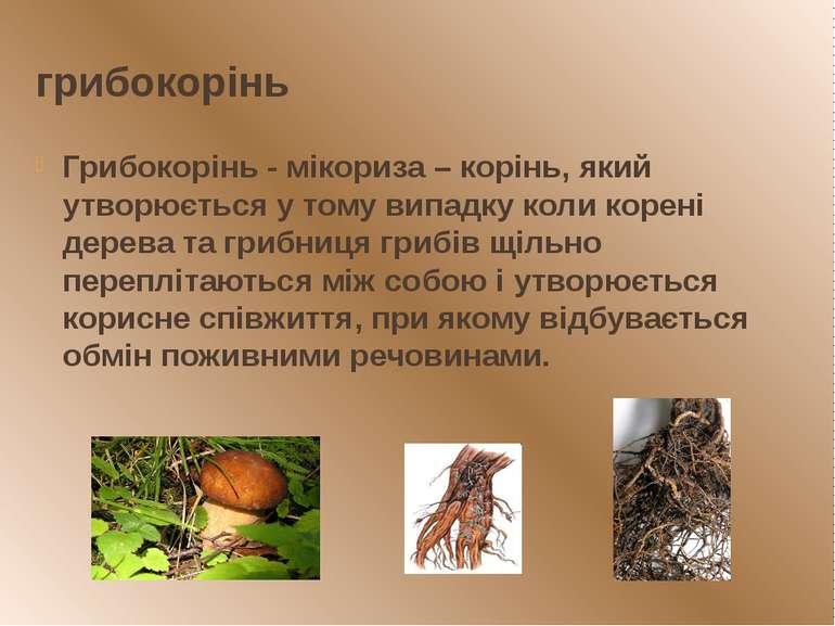 грибокорінь Грибокорінь - мікориза – корінь, який утворюється у тому випадку ...