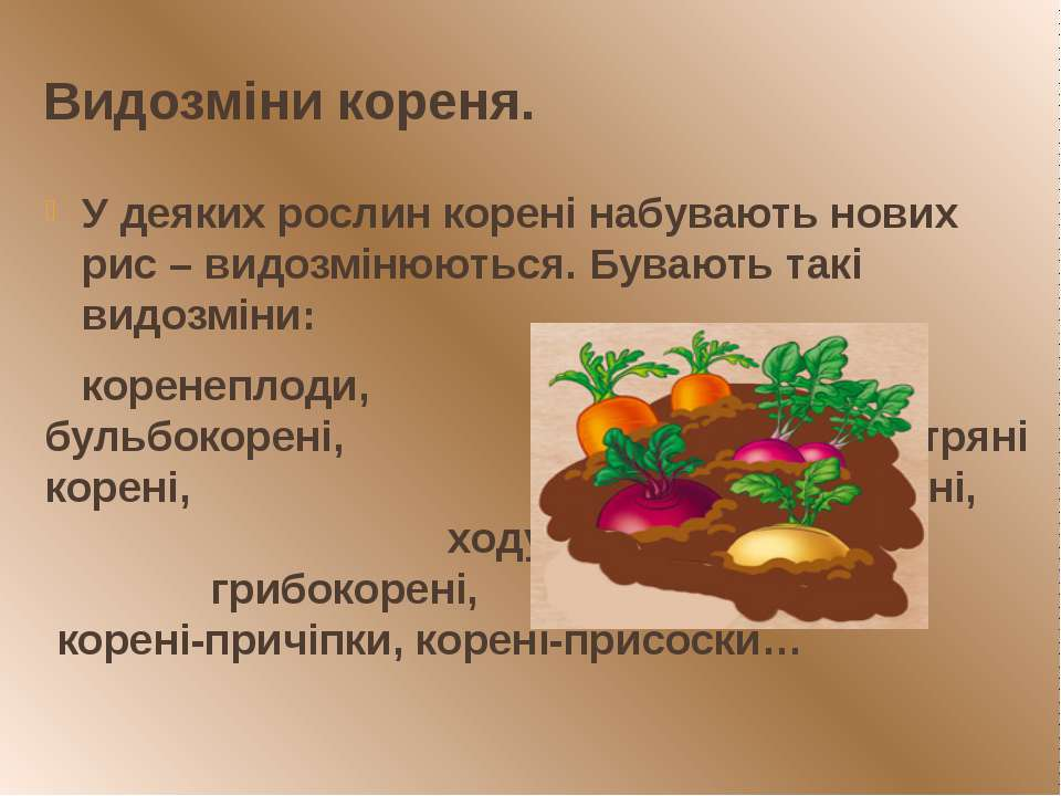 Видозміни кореня. У деяких рослин корені набувають нових рис – видозмінюються...
