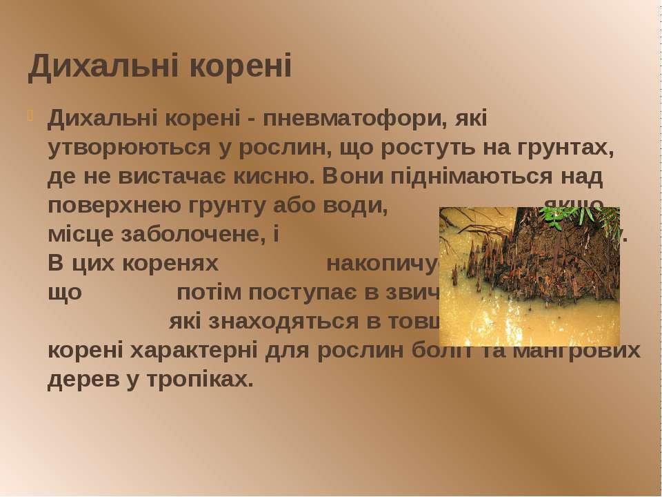 Дихальні корені Дихальні корені - пневматофори, які утворюються у рослин, що ...