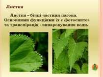 Листки Листки – бічні частини пагона. Основними функціями їх є фотосинтез та ...
