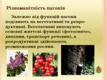 Різноманітність пагонів Залежно від функцій пагони поділяють на вегетативні т...