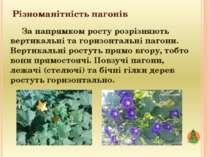 Різноманітність пагонів За напрямком росту розрізняють вертикальні та горизон...