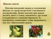 Цікаво знати Пагони плодових дерев в основному яблунь та груш вкорочені і наз...