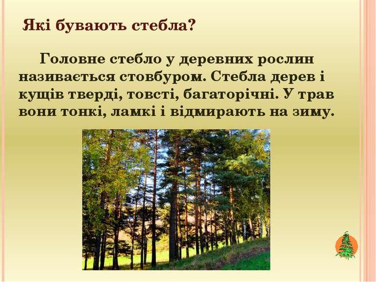 Які бувають стебла? Головне стебло у деревних рослин називається стовбуром. С...