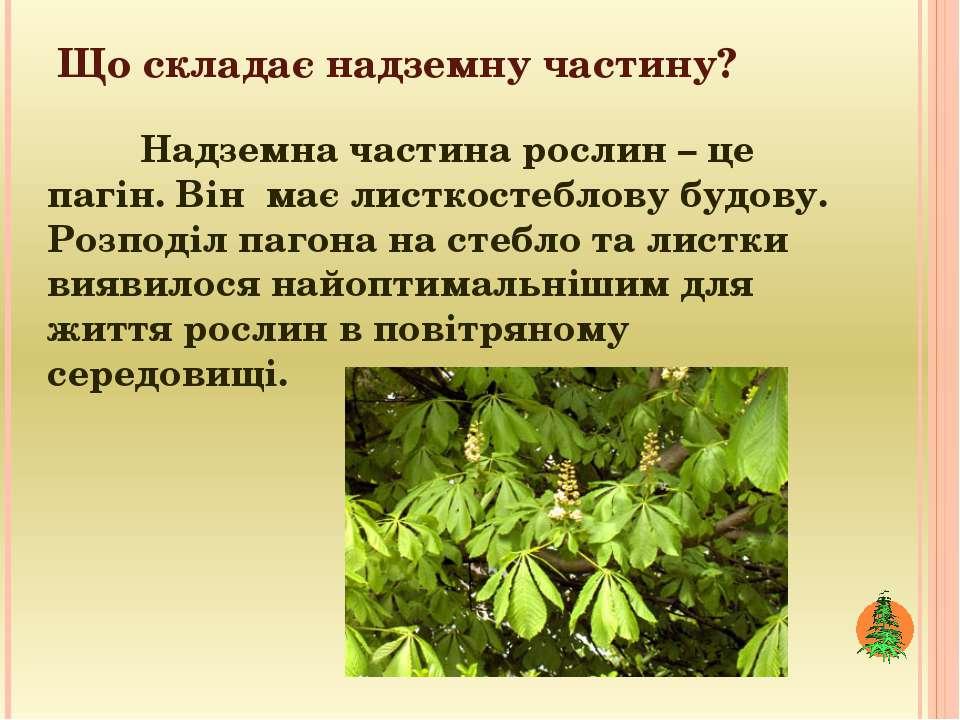 Що складає надземну частину? Надземна частина рослин – це пагін. Він має лист...