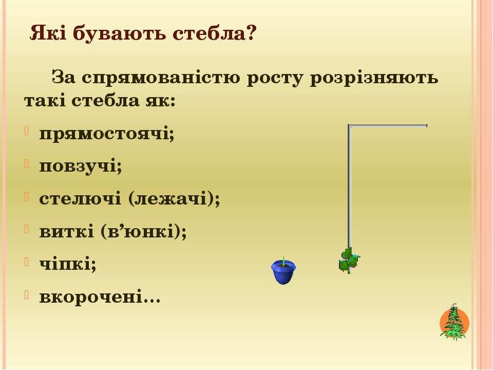 Які бувають стебла? За спрямованістю росту розрізняють такі стебла як: прямос...
