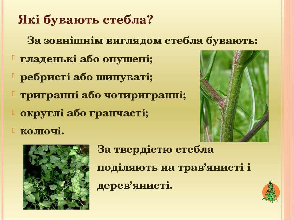 Які бувають стебла? За зовнішнім виглядом стебла бувають: гладенькі або опуше...
