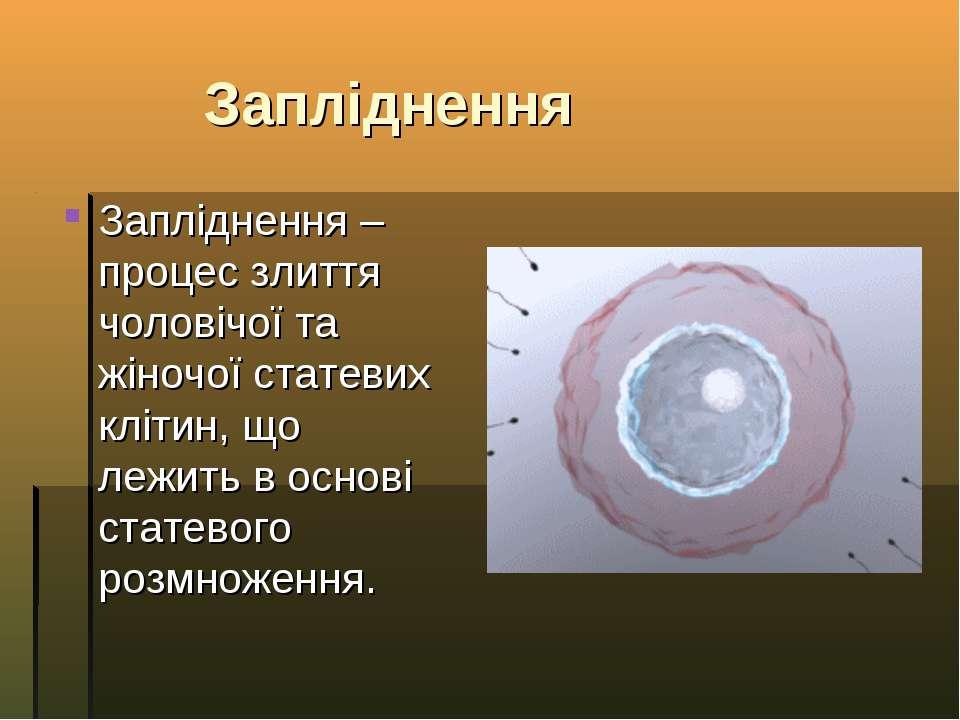 Запліднення Запліднення – процес злиття чоловічої та жіночої статевих клітин,...