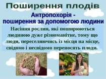 Насіння рослин, які поширюються людиною дуже різноманітне, тому що люди, пере...