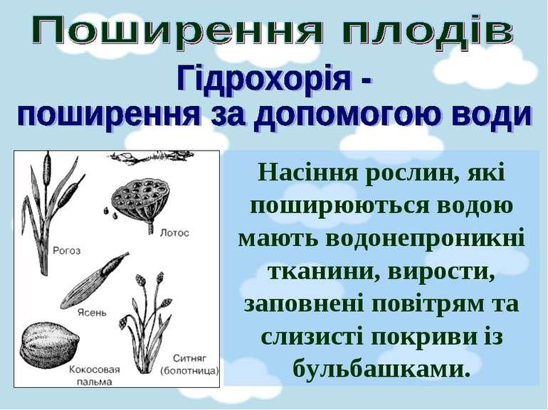 Насіння рослин, які поширюються водою мають водонепроникні тканини, вирости, ...