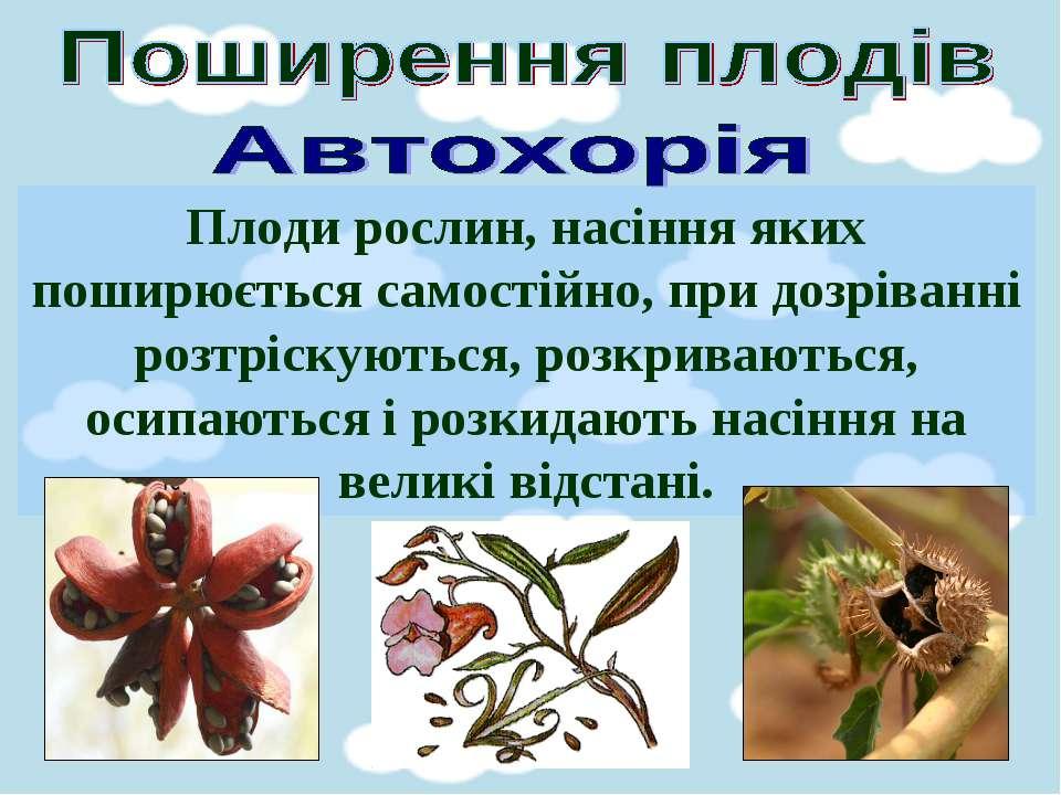Плоди рослин, насіння яких поширюється самостійно, при дозріванні розтріскуют...