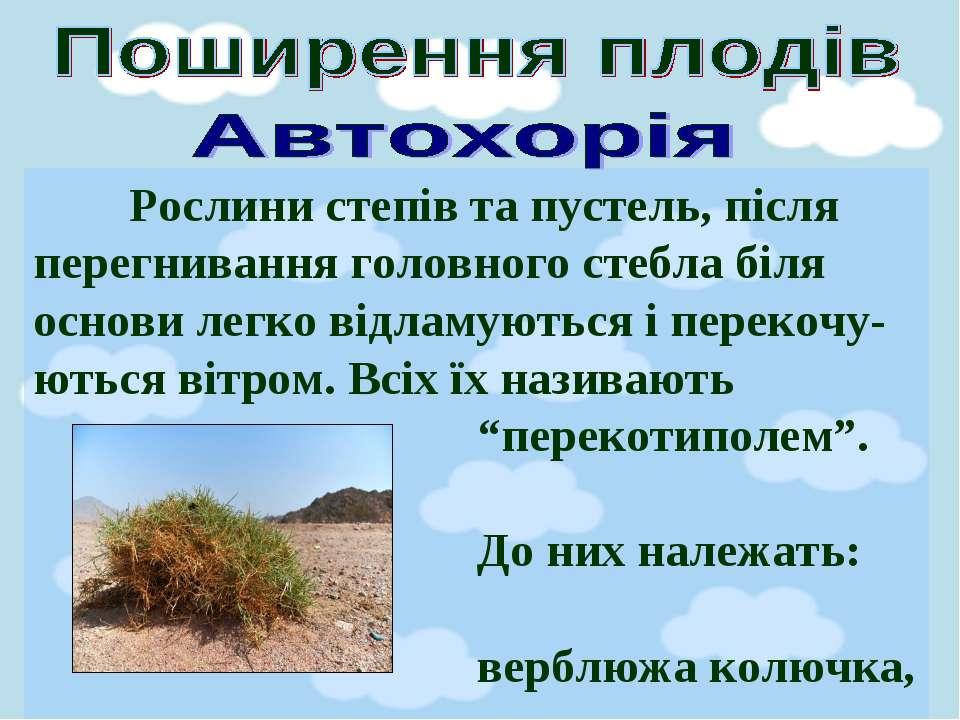 Рослини степів та пустель, після перегнивання головного стебла біля основи ле...