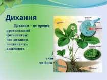 Дихання Дихання – це процес протилежний фотосинтезу. Під час дихання рослини ...