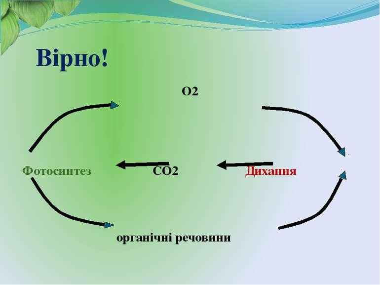 Вірно! О2 Фотосинтез СО2 Дихання органічні речовини